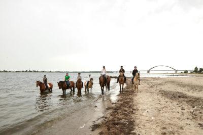 Sieben Reiterinnen auf Pferden am Meer Ausritt an den Strand von Fehmarn vom Küselhof